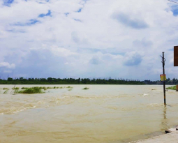 One Hindu's Environmental Pilgrimage from Triveni Ghat to Tampa to the Future
